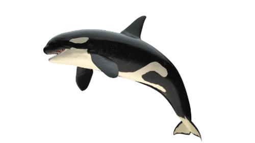 killer whale | forex signal room | premier forex league